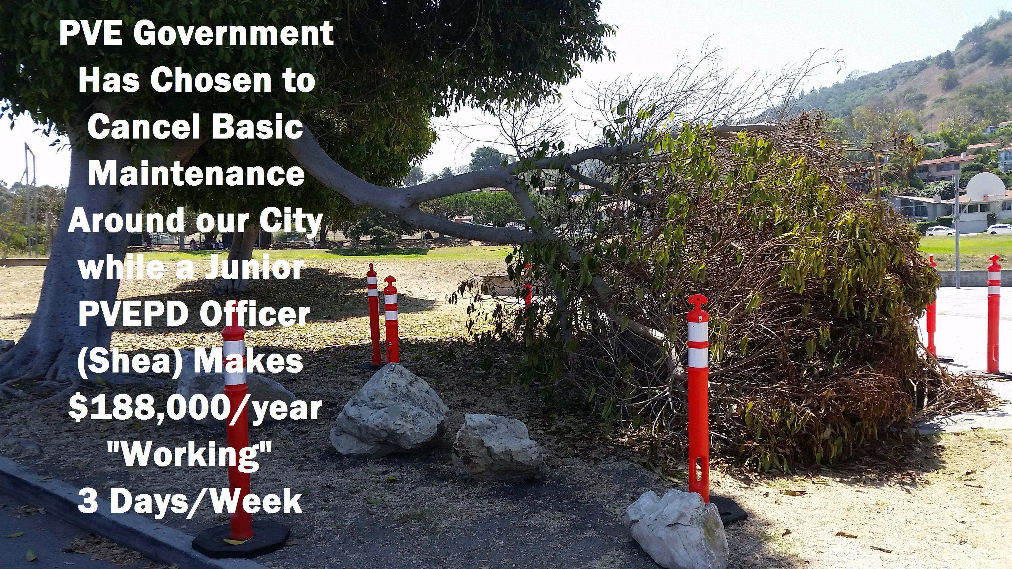 PVE Malaga Cove School Fallen Limb 07-21-2017 - Annotated