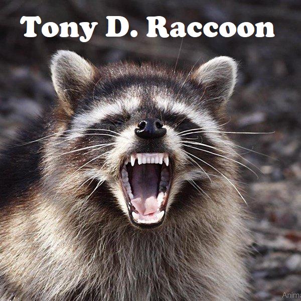 Raccoon Angry - Tony D
